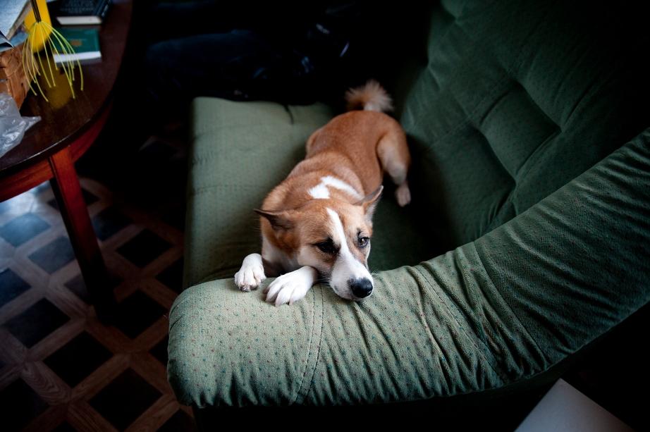 TISK_hunden